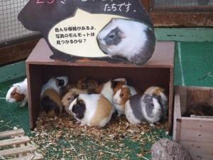 動物園②  ほし組
